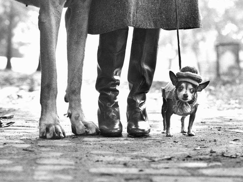 Elliott Erwitt – Unter Hunden